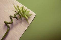 Bamboo spa Royalty Free Stock Photography