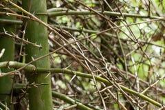 Bamboo spine Stock Photo