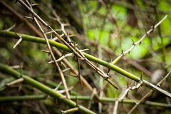 Bamboo spine Royalty Free Stock Photos