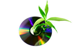 Bamboo sprout growing through compact disc Stock Photo