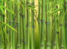Bamboo forest. Bamboo sprouts forest, shallow depth of focus Stock Photo