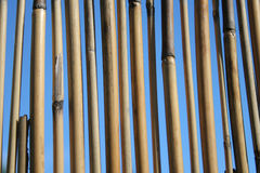 Bamboo stalks. On blue bakground Stock Photography