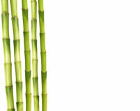 bamboo stalks Stock Image
