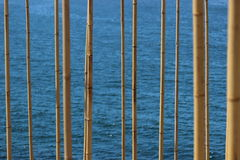 Bamboo stalks. On a water/ocean background in australia Royalty Free Stock Photography