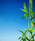 Bamboo stalks on blue glass wet Royalty Free Stock Photos