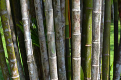 Bamboo stalks Royalty Free Stock Photos