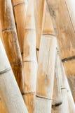Bamboo Stalks Stock Image