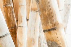 Bamboo Stalks Stock Photos