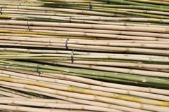 Bamboo stalks in bundle Stock Image