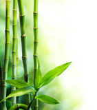 Bamboo stalks and light beam. For spa background Stock Photography