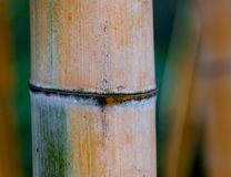 Bamboo stem Royalty Free Stock Photo