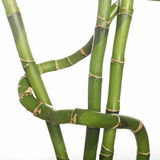 Bamboo stems. Studio close up of bamboo tree stems stock photography