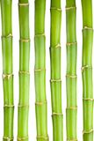Bamboo stems. On white background Stock Image