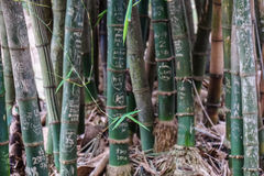 Bamboo stems with engraved graffiti words Stock Photos