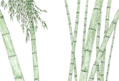 Bamboo stems and foliage over white background Stock Images