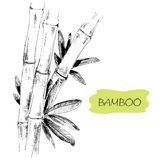 Bamboo. Stems and leaves. Hand drawn graphic illustration royalty free illustration