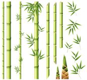 Bamboo stems and leaves. Illustration stock illustration