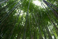 Bamboo stems Royalty Free Stock Photography