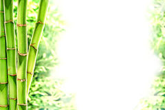Bamboo Stems and Wild Grass over White Background. Asian inspired green bamboo plant stems composition with wild grass background over white Stock Photography