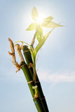 Bamboo stick Royalty Free Stock Images