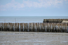 Bamboo stick coastal protection. Landscape view of coastal mangrove forest conservation site Stock Photo