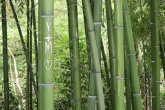 Bamboo stick from french park in Montauban stock photo