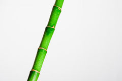 Bamboo stick Stock Photography