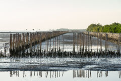 Bamboo stick for slow waves hit the coast, the Gulf of Thailand Stock Photos