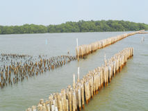 Bamboo stick for slow waves hit the coast, the Gulf of Thailand Royalty Free Stock Image