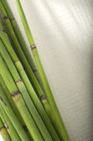 Bamboo Sticks Stock Image