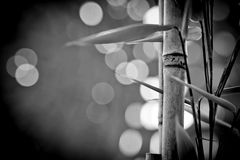 Bamboo sticks Stock Images