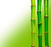 Bamboo sticks against blured background Stock Photo