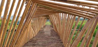 Bamboo walkway. stock image