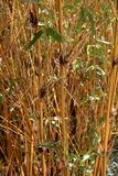 Bamboo sticks with green leaves Stock Image