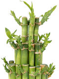 Bamboo sticks tight together full view Stock Photos