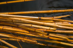 Bamboo sticks in water Royalty Free Stock Images