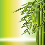 Bamboo still life. Bamboo background with copy space,  illustration Stock Photos