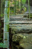 Bamboo beside stone road Stock Images