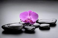 bamboo stones zen Στοκ Εικόνα