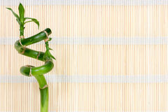 Bamboo  on the   straw mat background Stock Images