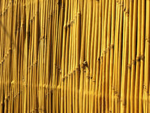Bamboo strips. Strips of bamboo making a wall or fence Stock Photography