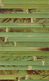 Bamboo structure. Natural structure of a bamboo skan image Stock Images