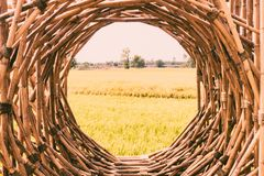 Bamboo structure woven round shape pattern material nature background royalty free stock images
