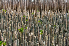Bamboo stump in the forest. Bamboo stump in forest protection, surge and landslides royalty free stock photo