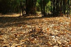 Bamboo stump. Tropical garden summer Royalty Free Stock Photos