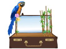 Bamboo in suitcase Stock Photos
