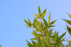 Bamboo Sun Stock Photos