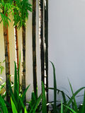 Bamboo, sunlight and white wall Stock Photo