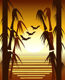 Bamboo sunset Royalty Free Stock Photo