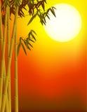 Bamboo and sunset background stock illustration